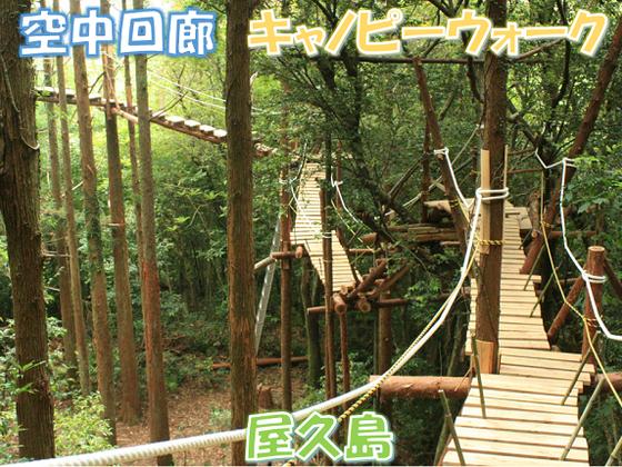世界自然遺産・屋久島その森林環境を救う「空中回廊」の建設