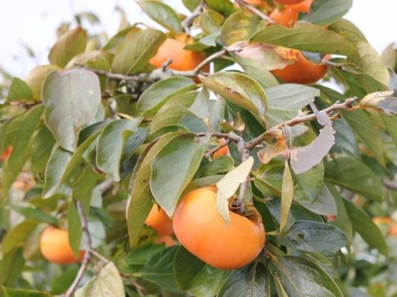 品質、味にこだわる草生栽培の弱点を乗用草刈り機購入で克服する