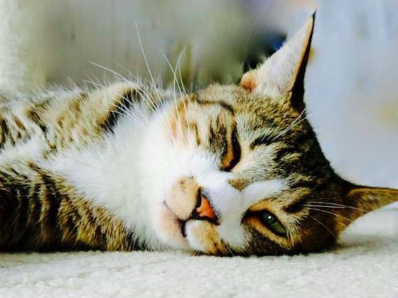 幸せな猫ライフを過ごせるシェルター式保護猫カフェを作りたい