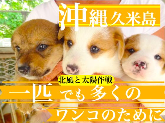 """"""" 北風と太陽作戦 """" 沖縄久米島のワンコに避妊の贈り物を!!"""