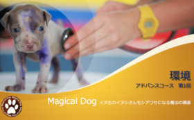 『イヌもカイヌシさんもシアワセになる魔法の講座』アドバンスコース