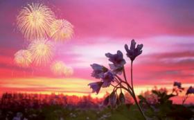 芽室花火大会をサポートしよう!当日使えるドリンク券付き!