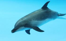 【手話ガイド育成を応援!】イルカのタッチングなど水族館体験ツアー