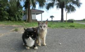 石垣島の猫達への応援コース