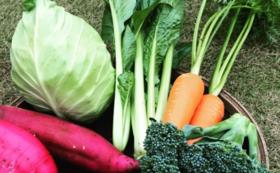 【畑から新鮮野菜をお持ち帰りで応援!】