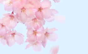 【気軽に応援!】大井沢に残る伝統品、月山和紙を使用したサンクスカードをお届け!