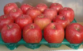 飯綱町のりんごを味わい、北部高校の地域おこしを全力で応援してください!