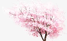 「冬の櫻 啓翁桜」をご自宅へお届け!(日本酒なし)