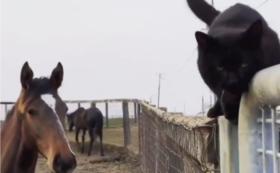 3, 馬も他の動物たちも幸せに過ごせる牧場へ-全力応援コース-