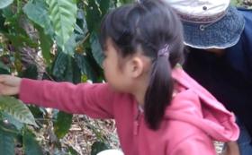 11月3日【沖縄県国頭郡今帰仁村】はこぶねコミュニティ日帰り農業体験イベント