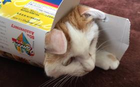 お礼の手紙、保護した猫のプロフィール、施設の案内ビラ