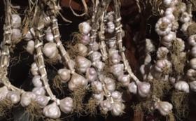 10月12日〜13日【沖縄県東村】はこぶねコミュニティ農業体験イベント(2日間)