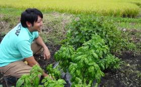 猿ヶ京の自然の中で育った夏野菜をお届け!