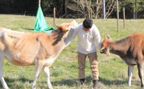 【2組限定】古民家滞在+山で育てる酪農体験の4泊5日プラン