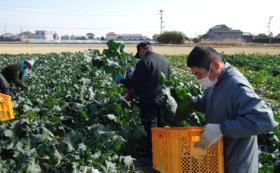 高床式砂栽培で栽培したお野菜コース!