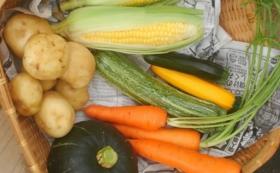 【手塚夫婦を食べて応援】旬のオーガニック野菜セット(5〜6種類)