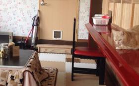 【先着20名】猫カフェ半日無料券