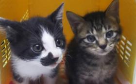 猫達の未来を全力で応援コース!