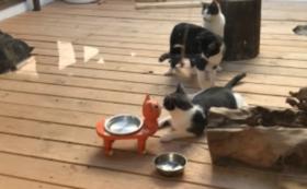 保護猫カフェバリアフリー全額応援