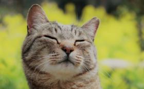 【野良猫ではなく、愛され猫を】どうぶつ基金のこれからに密着