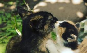 【野良猫ではなく、愛され猫を】どうぶつ基金のHPにお名前記載(希望制)