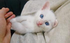 【野良猫ではなく、愛され猫を】どうぶつ基金から感謝状をお送りします。