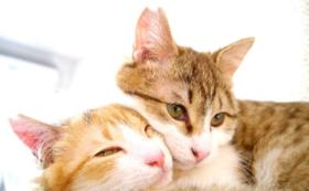 【野良猫ではなく、愛され猫を】どうぶつ基金から感謝の盾をお送りします。