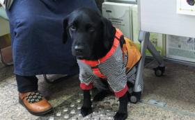 安藤美紀・聴導犬アーミがあなたの主催するイベントへ。講演&聴導犬デモをします!