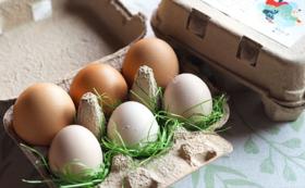 <飲食>とあさ村の平飼い烏骨鶏卵と鶏卵の食べ比べセット