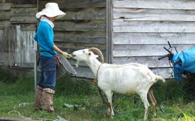 <体験>とあさ村の動物餌やり飼育体験