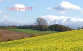美瑛駅120年記念絵馬+びえいの丘に植樹できる権利