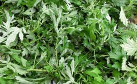 マンツーマン薬草ご利用アドバイスコース(1回)