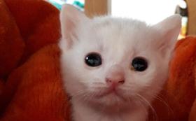 仔猫の幸せのために(リターン不要)