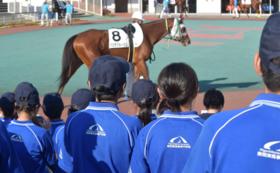【馬業界専用】求人情報の配布