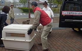 ペット同伴避難を応援するコース