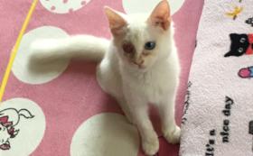 ミルクちゃん応援、保護猫、犬の支援コース~