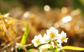 《花配りプロジェクト「ハナクバ」を支援!》お花で20人を笑顔に!