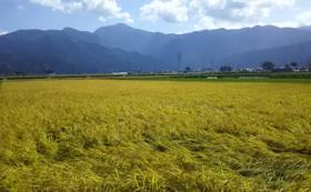 【福井県外の方限定】上庄里芋3k+上庄産米10kgコース
