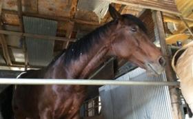 【10,000円コース】引退馬をクリアファイルで応援