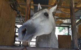 【30,000円コース】引退馬をフォトパネルセットで応援
