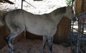 【50,000円コース】引退馬を和歌山県温川産の新米で応援
