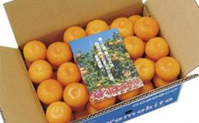 【先着20名限定!】「八咫烏CUPサポーター」+山北みかん+フルーツトマトコース