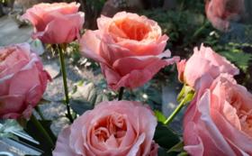 《花配りプロジェクト「ハナクバ」を支援!》お花で60人を笑顔に!