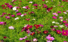《花配りプロジェクト「ハナクバ」を支援!》お花で200人を笑顔に!