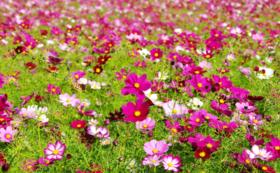 《花配りプロジェクト「ハナクバ」を支援!》お花で600人を笑顔に!