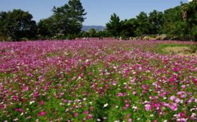 《花配りプロジェクト「ハナクバ」を支援!》お花で1000人を笑顔に!