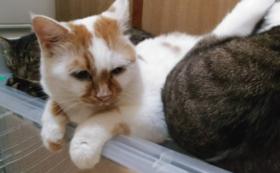 【30,000円】おりたてネコものがたり応援コース