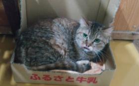 【100,000円】おりたてネコものがたり応援コース