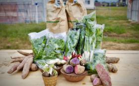 【県外の方向け】10名様限定!産地直送の野菜&お米セット【大】
