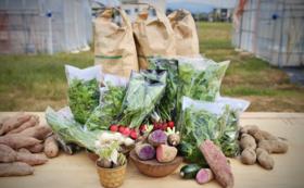 【県外の方向け】4名様限定!産地直送の野菜&お米セット【特大】